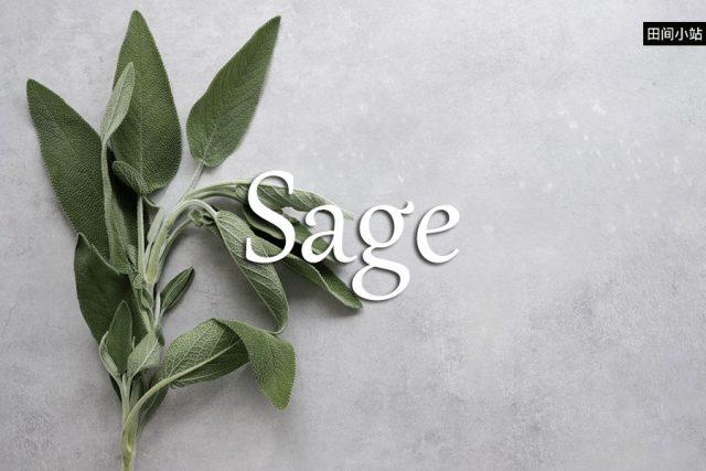小词详解 | sage