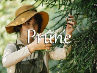 小词详解 | prune